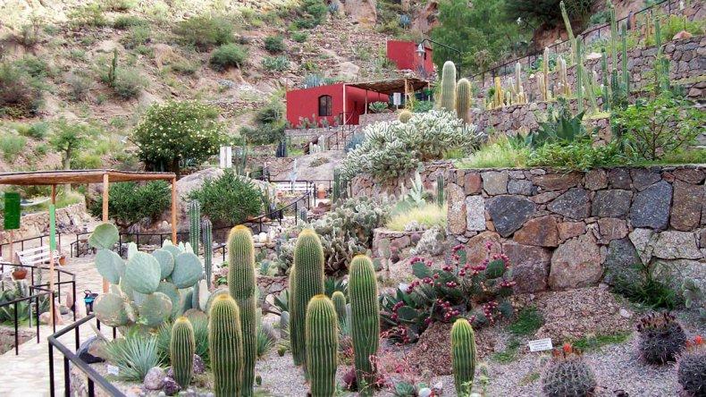 El cactario se asemeja a un complejo laberinto de cuadrículas que se despliegan sin mayores simetrías sobre el cerro como terrazas de cultivos incaicos.