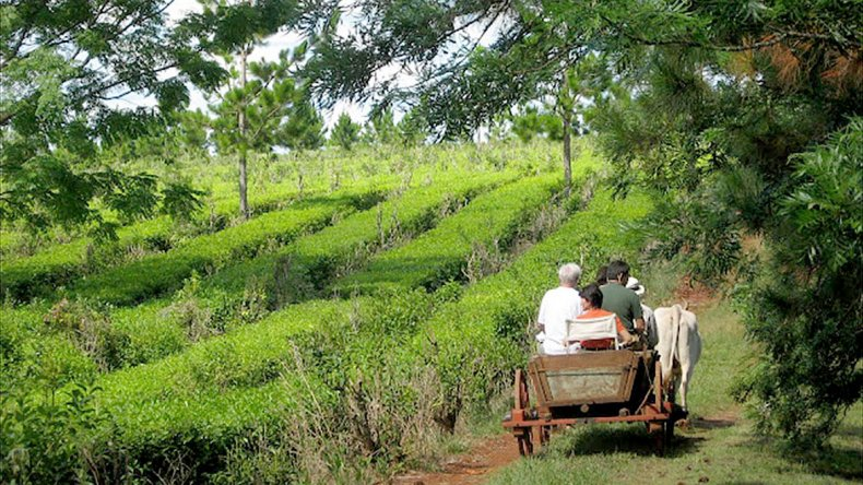 La Ruta de la Selva es el nuevo producto turístico de Misiones que rompe con el mito de que las Cataratas del Iguazú son lo único que hay por ver allí.