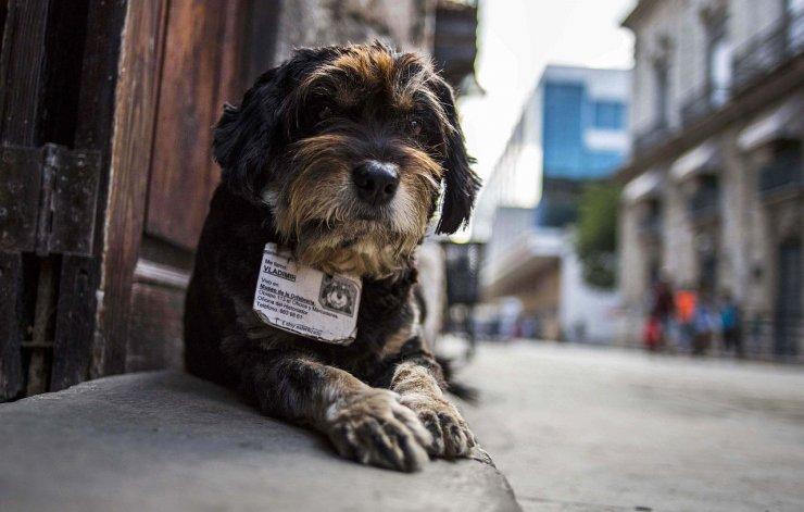 Cómo hizo Holanda para convertirse en el primer país sin perros callejeros