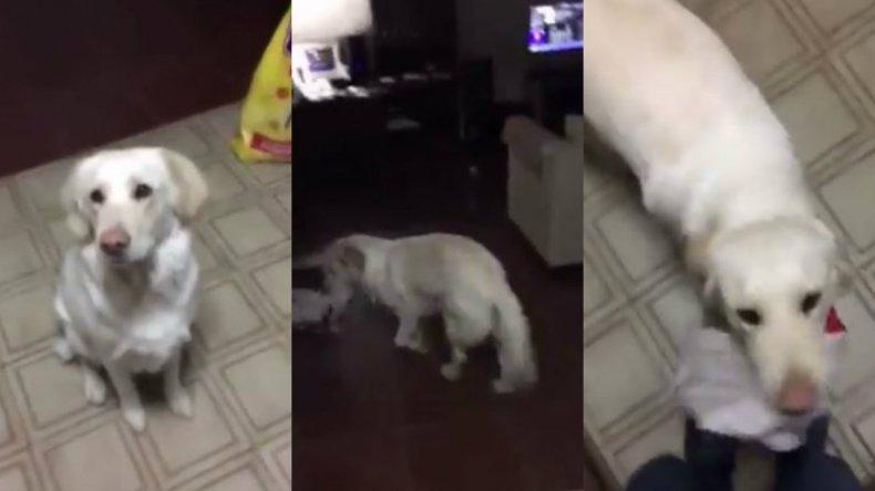 Pimienta: el perro que se vuelve loco con  las canciones de River