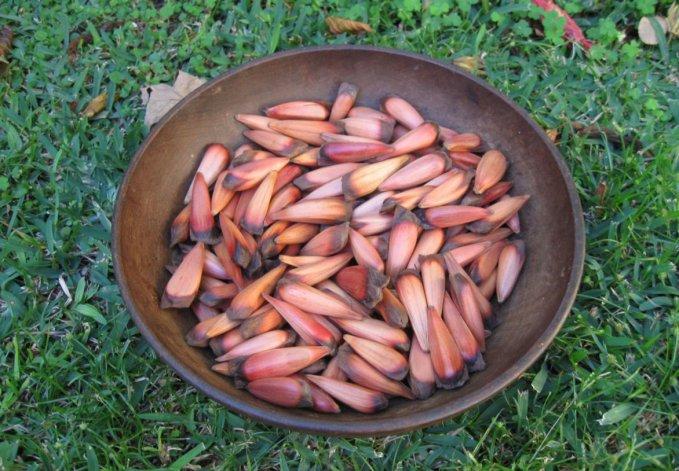 Probar platos con el clásico piñón es un imperdible en Neuquén.