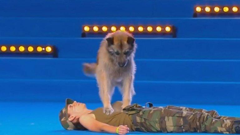 El perro que sabe hacer RCP sorprendió a todos