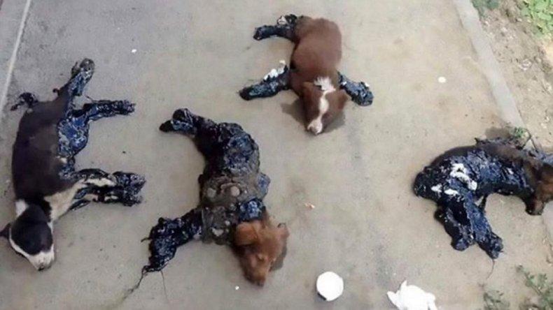 Horror: bañan a perros en alquitrán y los pegan al suelo