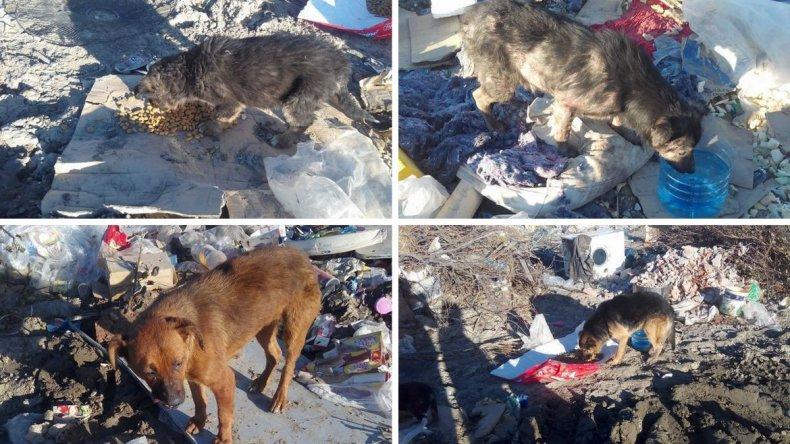 Jornada de alimentación de perros del basurero.