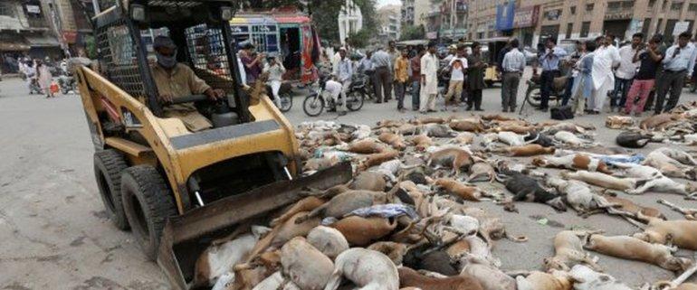 Comenzó una feroz matanza de perros callejeros