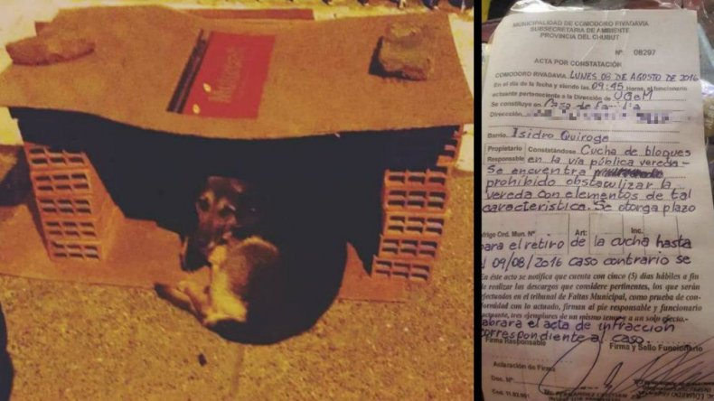 Les hizo una cucha a los perros del barrio y lo denunciaron en la Municipalidad