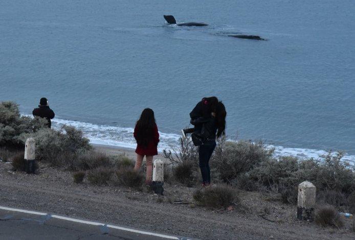 Pasaron las últimas ballenas