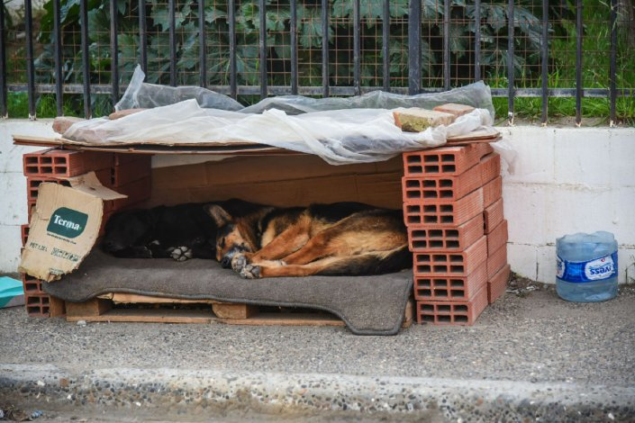 Negro y Fito duermen plácidamente en la cucha ambientada sobre la vereda.