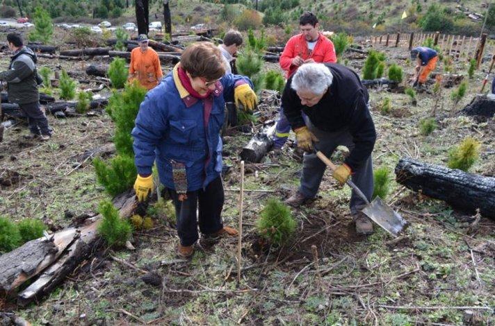 Plantación vecinal para recuperar Puerto Patriada tras los incendios