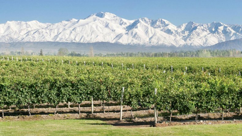 En Mendoza son muchas las bodegas que abren sus puertas a los turistas para catas y recorridos.