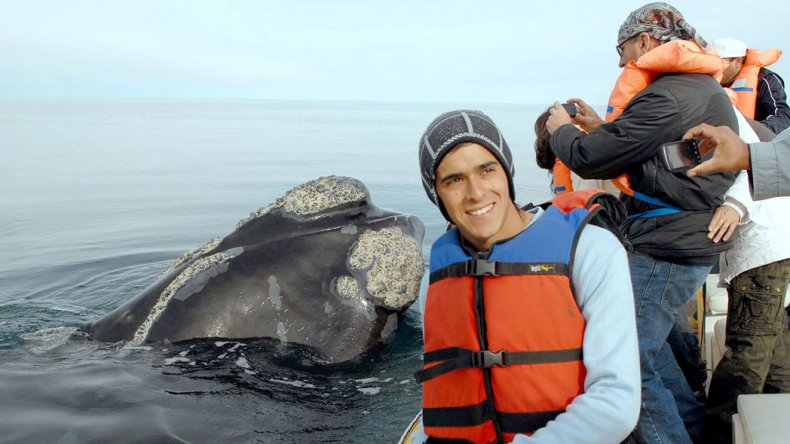 Hace cinco años que Río Negro prepara su temporada de avistaje con embarcaciones.