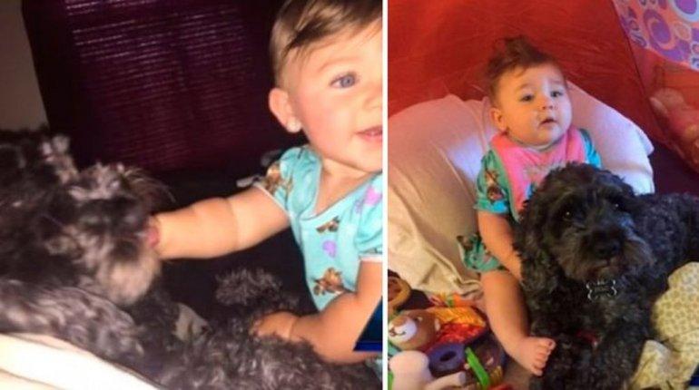 Un perro cubrió con su cuerpo a una beba y la salvó de un incendio