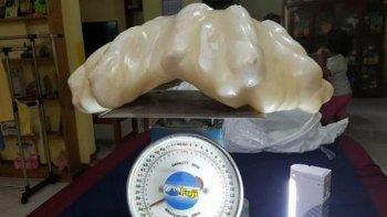 regalo una perla gigante sin saber que valia 100 millones de dolares