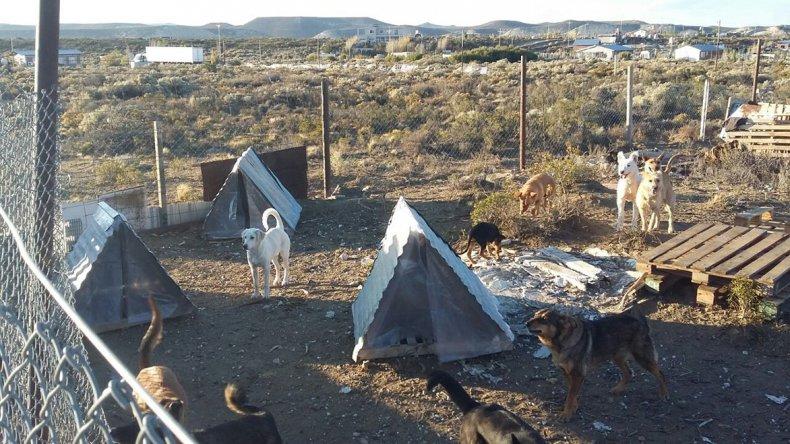 En el predio se les da refugio a varios perros abandonados por gente desaprensiva.