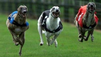 hoy presentaran un proyecto para prohibir las carreras de perros