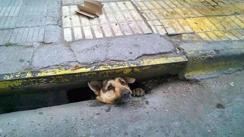 Rescataron a un perro que que quedó atrapado en una alcantarilla