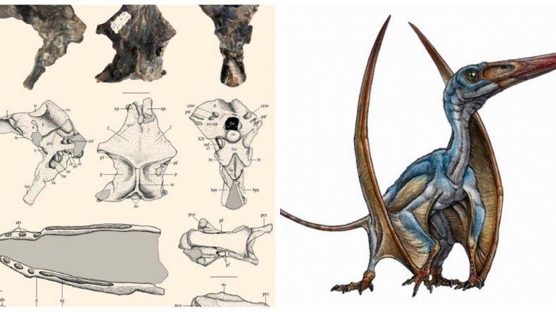 Descubrieron una nueva especie de reptil volador en Chubut