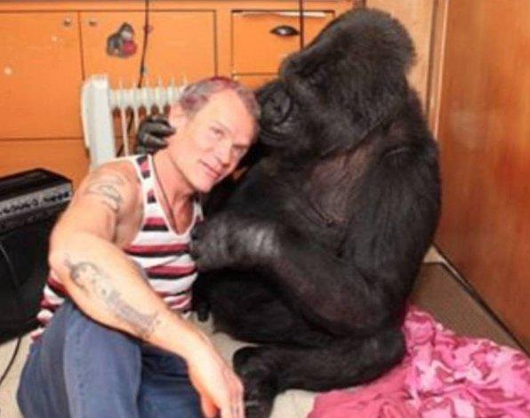 Flea de los Red Hot Chili Peppers le enseñó a tocar el bajo a un gorila