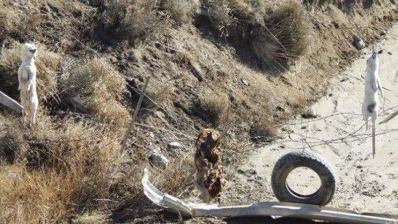 Dos de los perros que aparecieron colgados de alambrados a la vera de la ruta Provincial 15