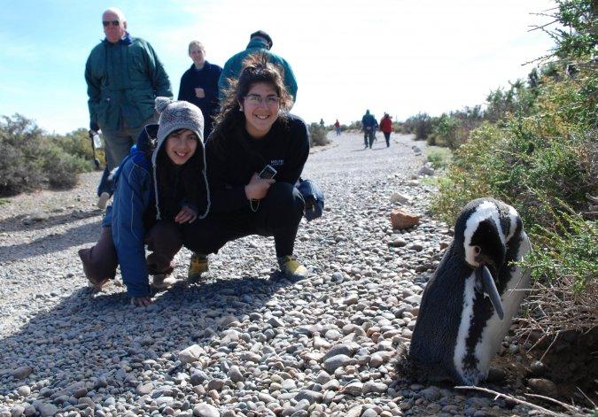Quedó inaugurada la temporada de pingüinos de Punta Tombo