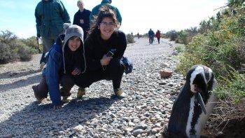 quedo inaugurada la temporada de pingüinos de punta tombo
