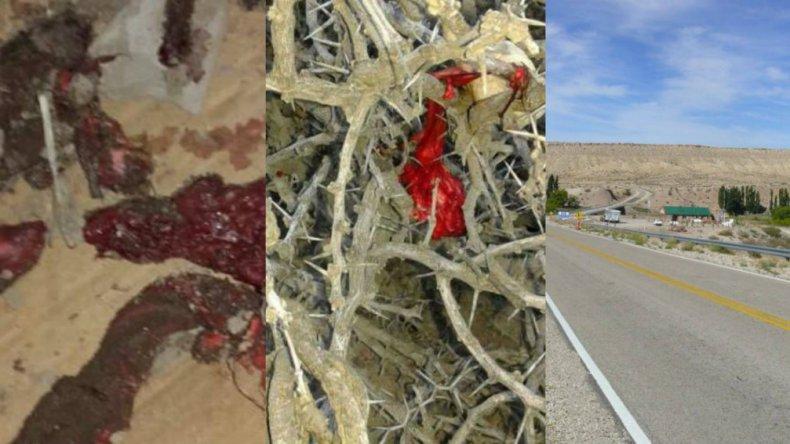 Llovió carne en un pueblo neuquino