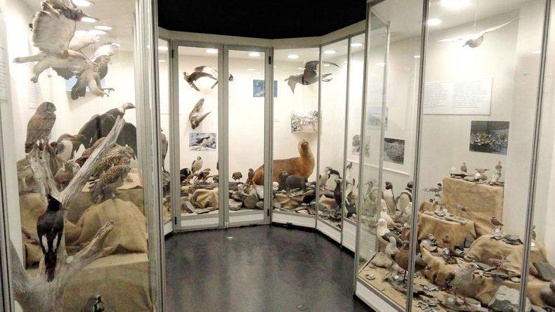Además hay un interesante vitral con que muestra las especies autóctonas.