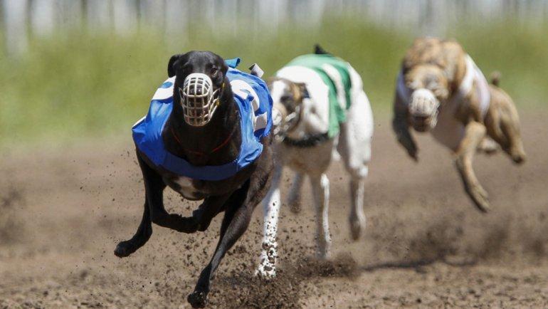 Es ley la prohibición de las carreras de galgos en todo el país