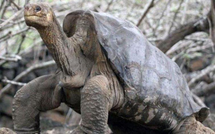 Este supermacho de 100 años tuvo 800 crías y salvó a su especie