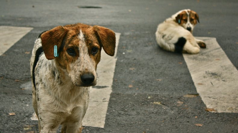Comodoro supera la media nacional de perros callejeros