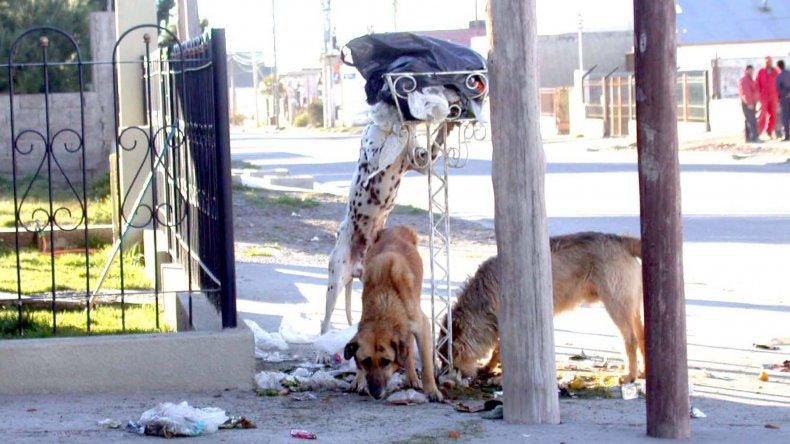 Control canino: para el Estado, la  eutanasia será el último recurso
