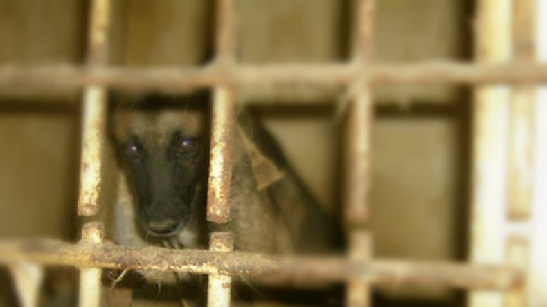 Los perros que atacaron a Sanin no tienen rabia y cuentan con libreta sanitaria