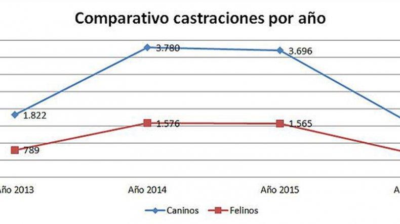 El municipio castró este año 50%  menos de animales que en 2015