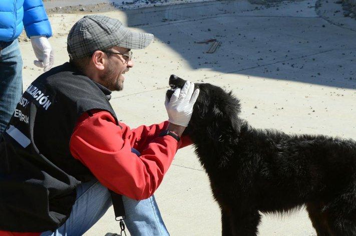 Inició la campaña de desparasitación y censo de mascotas