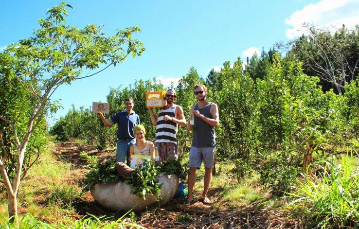 Se pueden conocer plantaciones de yerbales y molinos que producen la tradicional infusión.