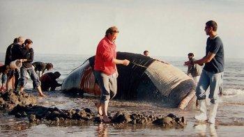 dia nacional de la ballena franca austral: ¿conoces la historia de garra?