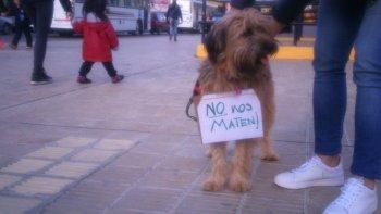 voces a favor y en contra de la perrera en las redes sociales
