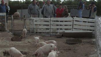 En La Agustina de Bella Vista Norte, los Pasqualetti viven de la cría y venta de porcinos.