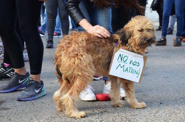 El descargo de la gente por el funcionamiento de la perrera