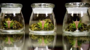 santa fe quiere imitar a chubut y aprobar el cannabis medicinal