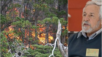 despues de la mayor tragedia ambiental, los bosques de cholila buscan renacer