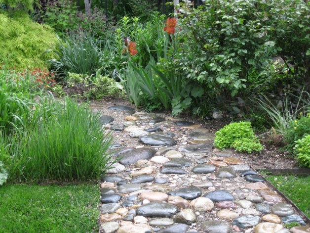 Robaba plantas y árboles para ornamentar el patio de su casa