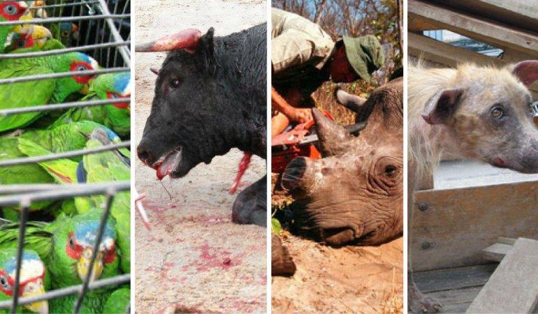 Experimentos, tráfico y maltrato: los animales padecen al hombre