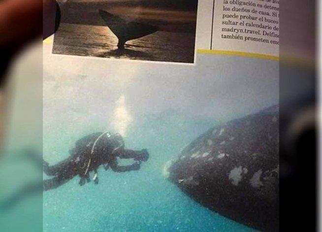 Piden que Aerolíneas deje de promocionar el buceo con ballenas