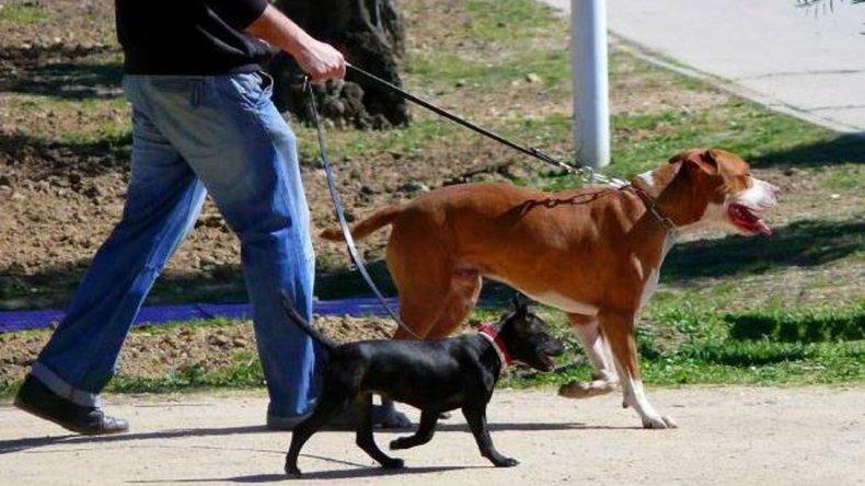 Además de prohibir el paseo de perros, se busca instalar dispensadores de bolsas y aplicar multas