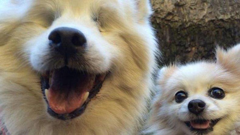 El perro ciego que tiene su propio lazarillo