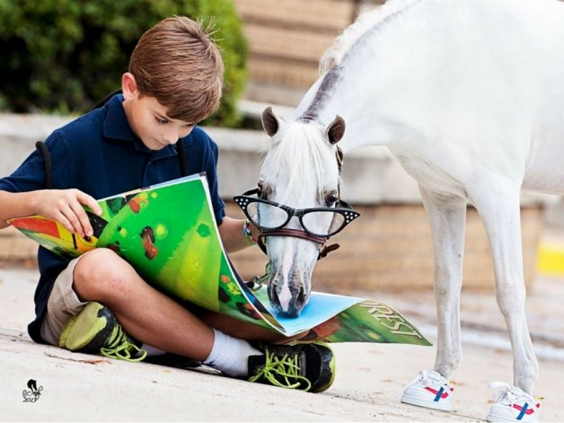 Los caballos también pueden aprender a leer