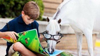 los caballos tambien pueden aprender a leer