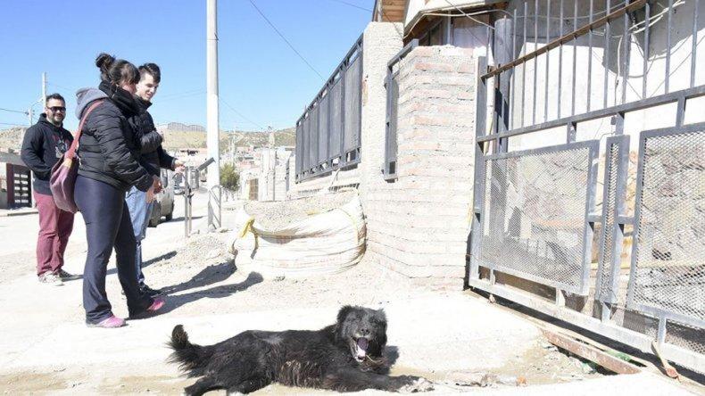 Jornada de censo y desparasitación canina y felina en Restinga Alí