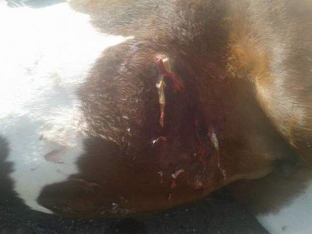 Denuncian robos, aprietes y matanza de animales en Bella Vista Sur